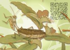 宋 李迪 秋卉草虫-QR code
